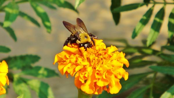 Busy Bee - Healthcare - Photography