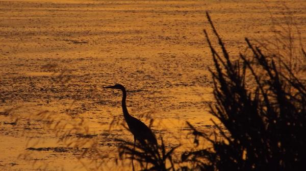 Golden Silhouette - Healthcare - Photography