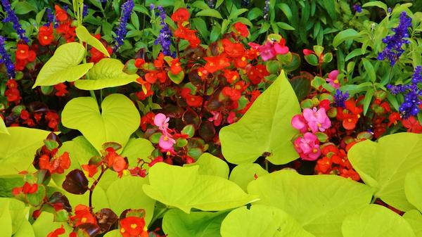 Summer Color - Healthcare - Photography