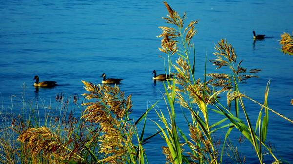 Morning Reeds - Healthcare - Photography
