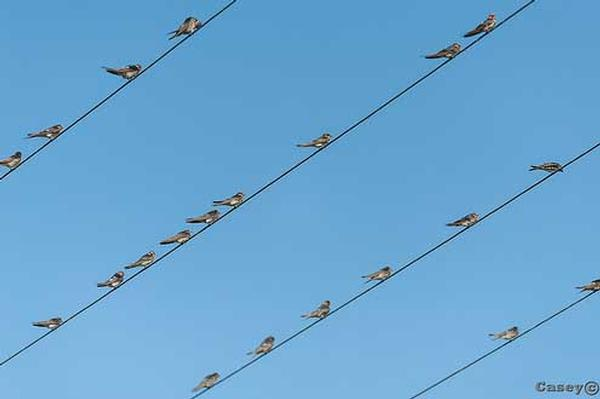 Birds on a Wire - Hospitality - Photography